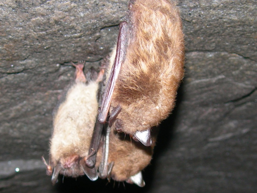 The Winter World of Bats